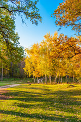 Beautiful pastoral autumn landscape with woodland and road