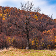 Autumn landscape - trees with bare branches in a forest on a hill.