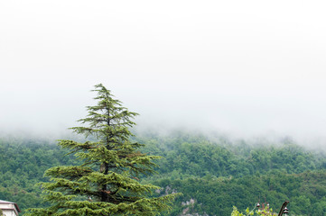 Morning fog in the mountains of the in the foreground with a large green tree, which have become beautiful deciduous forests