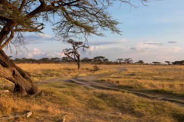 Landschaft: Samburu Nationalpark, Kenia