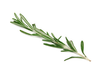Fresh rosemary on white