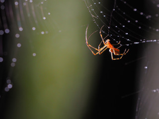 Half transparent spider on web blackground with bokeh