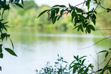 Branches of trees in the foreground and in the background a lake.