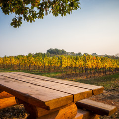 Resting place in vineyards in Burgenland Austria