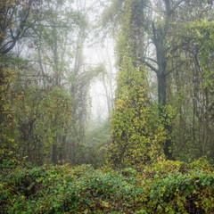 Rain forrest like with fog