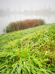 Reed and grass on the lakeside