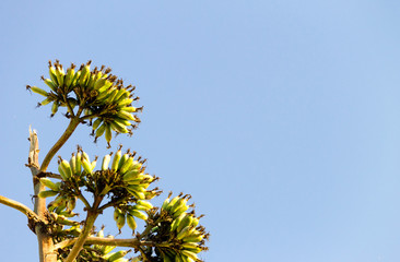 Exotic Plant on Blue Sky Background