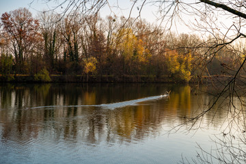 Décollage d'un canard sur le fleuve de la Moselle