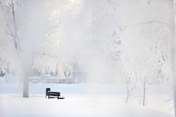 Bench on the frozen riverbank. Shot through snowy tree branches with telephoto lens at hight aperture giving image soft and ethereal feeling.