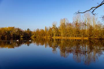 Vue d'un étang en automne où nagent des cygnes