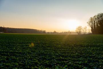 Champ agricole vert en automne sur un couché de soleil
