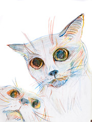Figure cats with colored pencils. Two cats in the picture. Colored pencils drawing