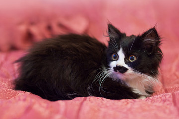 Black and white kitten sitting on pink background.