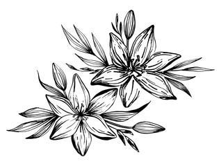 Hand drawn lilies flowers isolated on a white background. Lily Flower. Vector illustration for tattoo sketch, floral background, greeting card, wedding invitation , birthday, mother's, Valentine's Day