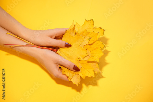 beautiful female hands on a background, holding autumn