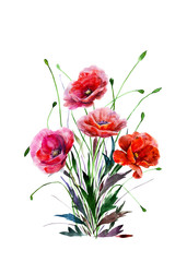 Bouquet of poppy flowers. Hand drawn watercolor illustration. Four red colors flowers. Elements for design isolated on white background. For wedding invitations, greeting cards, datings.