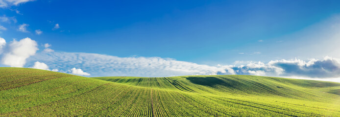 Canvas Prints Culture Green field and blue sky with clouds.