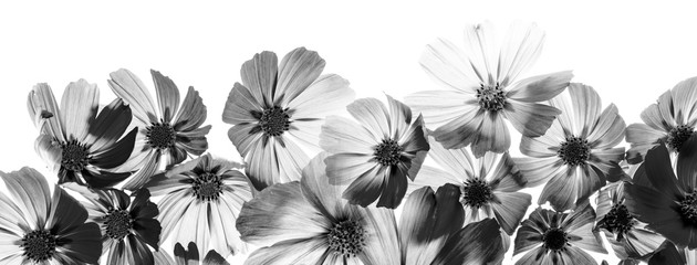 Foto auf Acrylglas Blumen a beautiful floral background from flower petals