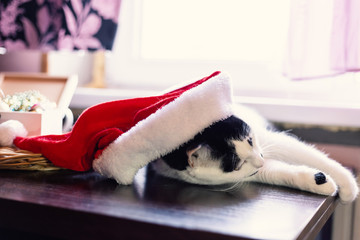 Cat with a Christmas hat. New year and Christmas concept still life photo