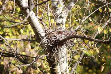 convolute nest on tree