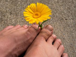 a flower between two feet
