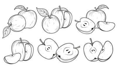 Set of apples. Black and white hand drawn vector illustration. Sketches and engravings apples composition.