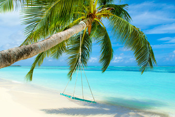 Wooden swing on a rope on a palm tree - fototapety na wymiar