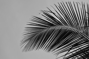 Minimalist palm leaf abstract background