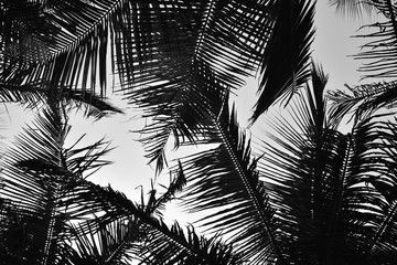Palm Trees Black and White Silhouette