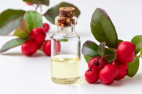 A bottle of wintergreen essential oil with wintergreen berries on a white background