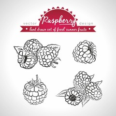 Raspberry. Set of fresh fruits, whole, half and bitten with leaf. Vector illustration. Isolated on white background