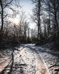 Snowy road in the woods
