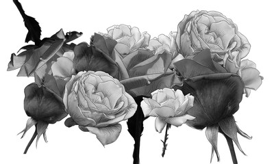Monochrome collage of roses with line art by jziprian