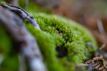 Close up macro photo of moss and lichen plastering bonsai tree