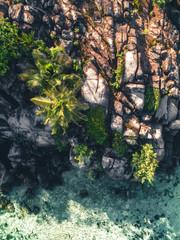 Tropical Island Lights