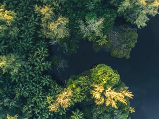 Tropical Jungle in Africa