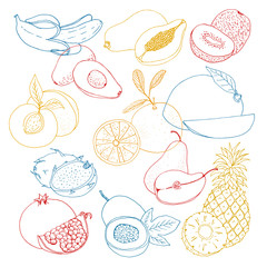 hand drawn vector illustration, a set of exotic fruits. sketch, graphic image