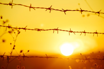 Barbed wire with sun ,Golden light of the sun, through the barbed wire and steel fence, suitable for graphics.Close up