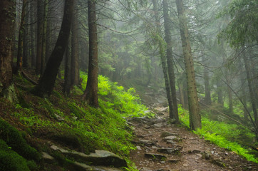 Mountain path among the trees. Carpathian mountain road. Beautiful mountain landscape. Travel mountain Carpathians.
