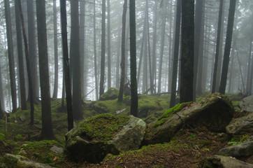 Mountain path among the trees. Carpathian mountain road. Beautiful mountain landscape. Travel mountain Carpathians.