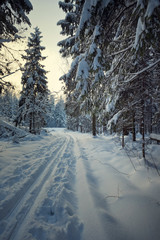 ski track in the winter forest