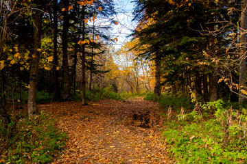 Scenic view of a forest pathway through autumn trees