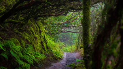 Door stickers Path in Anaga Rainforest on Tenerife island, Spain.