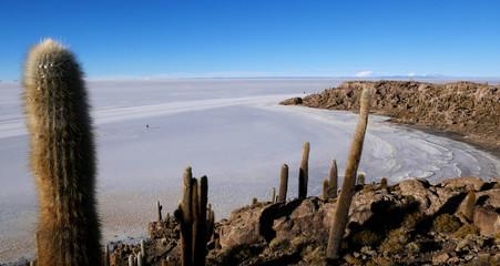 Incahuasi Island (Cactus Island) the world's largest salt flat area, Salar de Uyuni, Altiplano, Bolivia