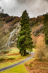Powerscourt Waterfall in the forest