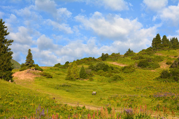 Lime coloure hill landscape with a horse