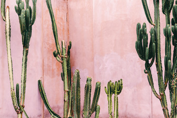Stores photo Cactus Plants on pink concept. Cactus on pink wall background. Minimal plant art