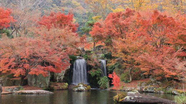 もみじと滝 溪石園 大分県耶馬渓 日本