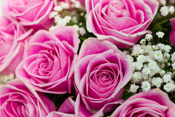 Pink roses flowers for use to background in valentine day