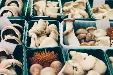 Different mushrooms in boxes